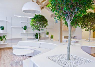 Vẻ đẹp độc đáo khi đưa cây xanh vào trong thiết kế nội thất văn phòng .