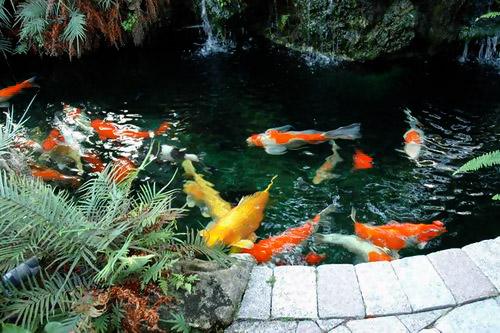 Thiết kế nhà đẹp với Yếu tố nước trong sân vườn