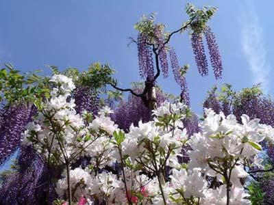 Tháng 5 - Tháng hoa tình yêu ở đất nước mặt trời mọc, thiết kế nhà đẹp